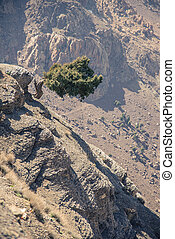 地図帳, モロッコ, 木, 立ちなさい, 単独で