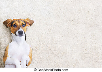 地毯, 模仿, 小狗, 空間