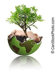 地球, 成長, 木