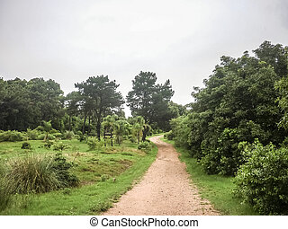 地球, 道, lussich, arboretum