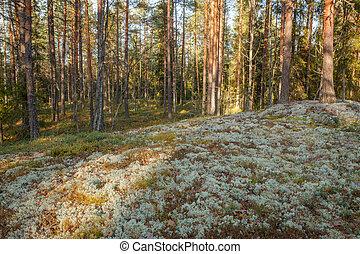 地衣類, 森林