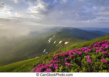 坂, エコロジー, 明るいピンク, 青い山地, パッチ, 太陽, concept., 雪, 火をつけられた, 下に, 山, 美しさ, 自然, 問題, 背景, 霧が濃い, 花, sky., 曇り, 緑, 咲く, 草