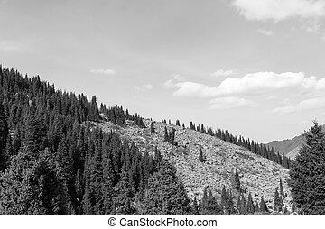 坂, 山, トウヒ, 森林