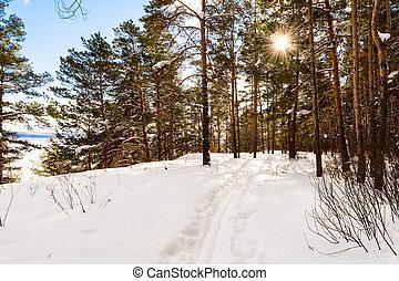 坂, 球果を結ぶ, 光線, 冬, 山, 太陽, 明るい, 森林, 風景