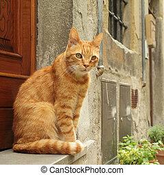 坐, 房子, 姜貓, 前面, tuscan
