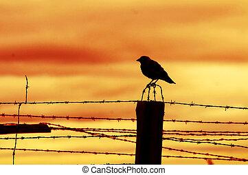 坐, 鸟, 栅栏, 监狱