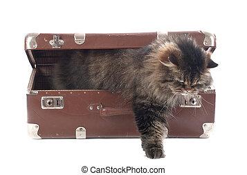型, ねこ, から, 得る, スーツケース