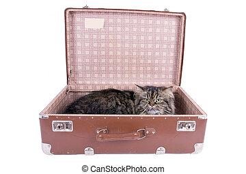 型, ねこ, イラン人, あること, スーツケース