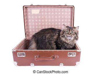 型, ねこ, スーツケース, イラン人, モデル