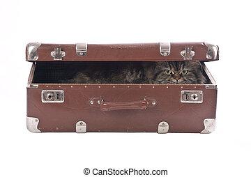 型, ねこ, 古い, スーツケース