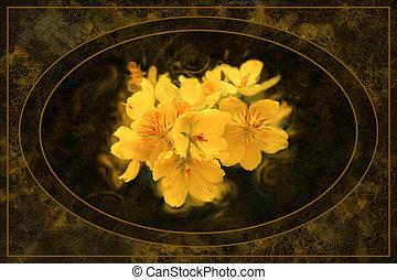 型, オバール, スタイル, 花, アプリコット, 背景, 花, 黄色