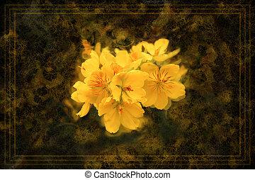 型, スタイル, 花, アプリコット, 背景, 花, 黄色