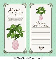 型, ラベル, ∥で∥, alocasia, 植物