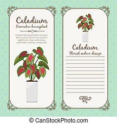 型, ラベル, ∥で∥, caladium, 植物