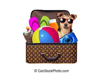型, 休暇, 夏, 旅行, 隔離された, わずかしか, 白, スーツケース, フルである, 旅行, ホリデー, パックされた, 項目, 旅行, 犬