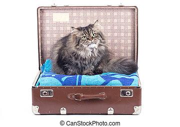型, 位置させること, ねこ, イラン人, スーツケース
