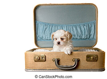 型, 子犬, ごく小さい, スーツケース