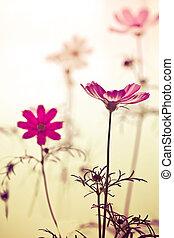 型, 宇宙の花