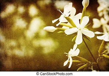 型, 白い花, バックグラウンド。
