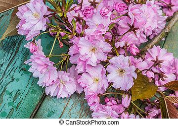 型, beautifufl, さくらんぼ, 日本語, 背景, 春の花