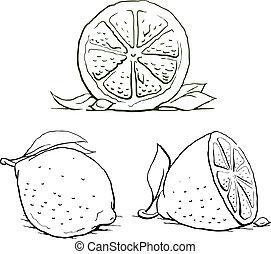 型, set., leaf., レモン, 熟した