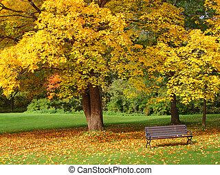 城市公园, 在中, 秋季