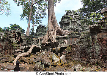 城市, 古老, 牆壁, 複雜, 毀滅, angkor