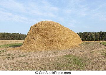 堆, 在中, 稻草, 在中, the, 领域