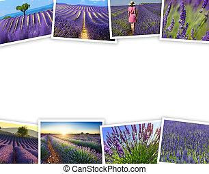 堆, ......的, 淡紫色, 領域, 旅行, 相片, 由于, a, 白色 背景