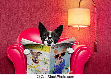 報紙, 家, 閱讀, 狗