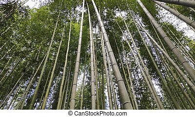 場所, 竹, 有名, arashiyama, 森林, 京都
