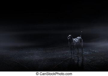 墓地, 暗闇, 犬