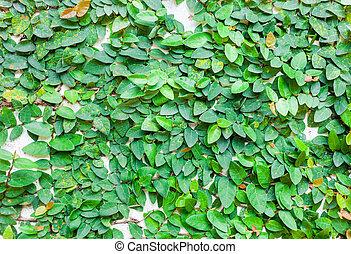 墙壁, 离开, 绿色的背景, 结构