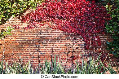 壁, れんが, 葉, 赤