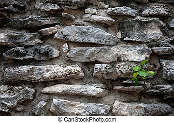 壁, 古代, mayan