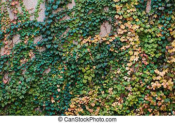 壁, 情報のルート, 石