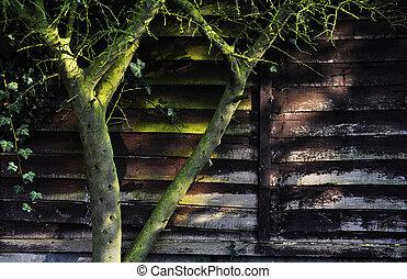 壁, 木, ツタ, 木製である