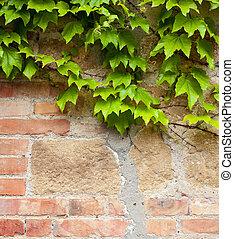 壁, 緑, れんが, 古い, ツタ