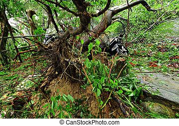 壊される, 台風, 木, 台無しにされる