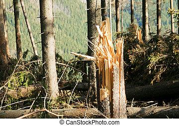 壊れた木, 災害, 風