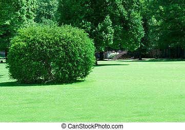 夏天, 公园, 带, 美丽, 绿色, 草坪