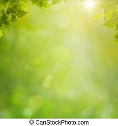 夏天, 在中, the, 森林, 摘要, 自然, 背景, 带, 新鲜, 叶子, 同时,, bokeh