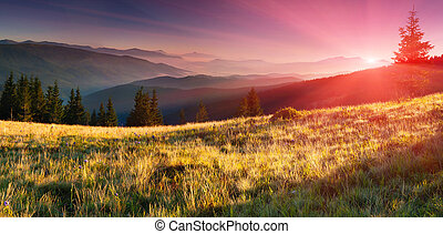 夏天, 山。, 日出, 風景