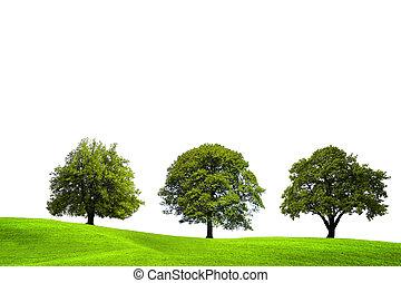 夏天, 树