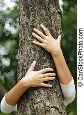 夏天, 樹, 手, 公園, 擁抱, 樹干