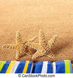 夏天, 海灘, starfish, 站立, 邊框, 廣場