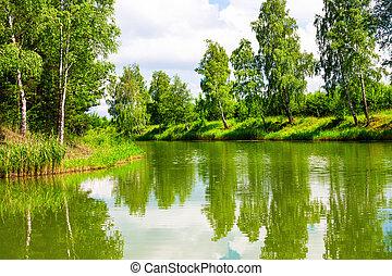 夏天, 绿色的公园
