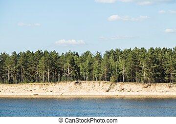 夏天, riverside, 河, 森林, 风景