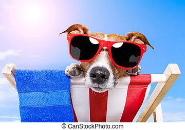 夏季休暇, 犬, 休暇