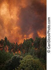 夏, ポルトガル, 火, 細部, 森林, 野生